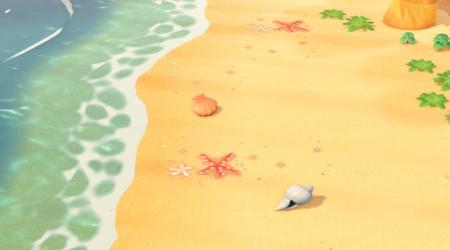 Coquillages pour la plage