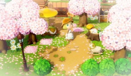 Chemin fleurs sakura